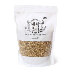새싹보리 씨앗 1kg