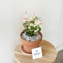 꽃처럼 예쁜 오색마삭 토분