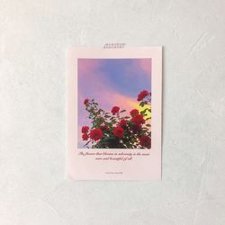 Pink Sunset 인테리어 포스터