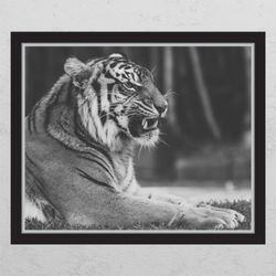 pc677-풍수흑백호랑이3창문그림액자