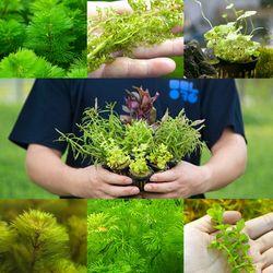 초보자용 랜덤수초 초보수초 세트 - 25촉내외
