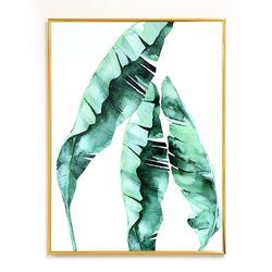 나뭇잎 인테리어 식물액자 트로피칼 바나나 잎 액자