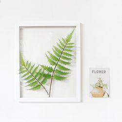 그리너리 루모라고사리 식물액자 인테리어 투명액자