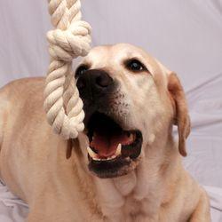 구바스 강아지 고양이 장난감 터그 놀이 이갈이 순면 로프 S