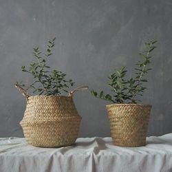 올리브나무 바구니 세트