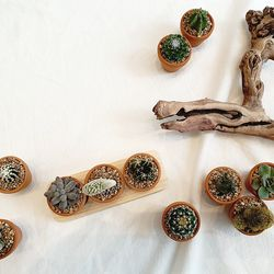 다육식물 3종 랜덤 세트