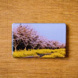 제주 놀멍쉬멍 마그넷 - 벚꽃동산