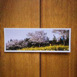제주 놀멍쉬멍 사진엽서 - 제주벚꽃