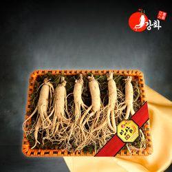강화초지인삼 명품 수삼 1채 750g (5-7뿌리)
