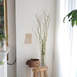 곱슬버들 생화 인테리어 잎가지
