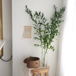 신루스커스 생화 인테리어 잎가지