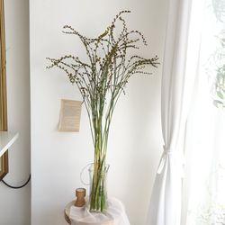 이끼시아열매 생화 인테리어 잎가지