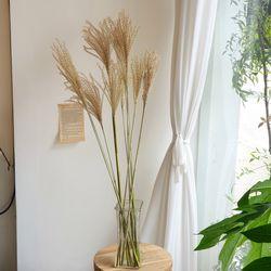 억새 생화 인테리어 잎가지