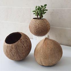 천연 코코넛 화분 행잉 화분