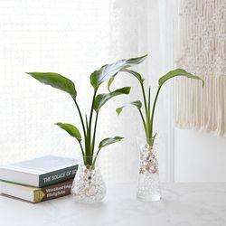 수경재배 극락조 공기정화 수중식물