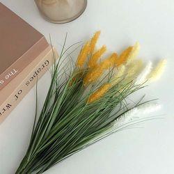 리얼 들꽃 강아지풀