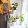 공기정화식물 슬릿화분 분갈이 키트 DIY (분갈이키트+식물포트)