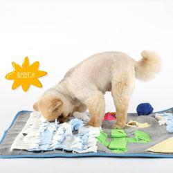 사막의 오아시스 강아지 노즈워크 분리불안 훈련 스트레스 해소