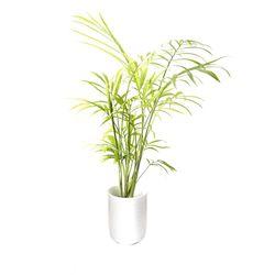 긴원형 포트수초 테이블야자 - (쉬운수초 예쁜수초)