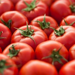 [무료배송] 유럽종 완숙 찰토마토 5kg