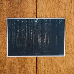 제주 놀멍쉬멍 사진엽서 - 사려니숲길