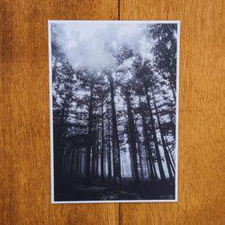 제주 놀멍쉬멍 사진엽서 - 비내린후의숲