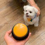 와와펫 도그벨 X 4개세트 강아지 녹음부저