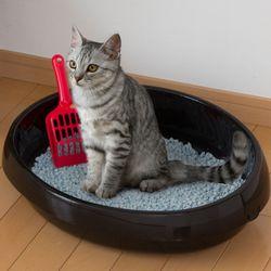 아이리스 오픈형 고양이 화장실 대형 PNE-480