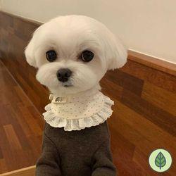 개달당 오가닉 백설공주 양면 턱받이 강아지턱받이 고양이턱받이