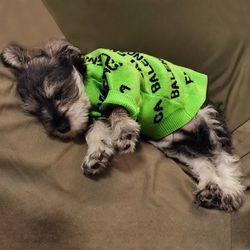 강아지옷 견렌시아가 애견 패턴 스웨터 니트 맨투맨 티셔츠