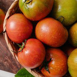 백화점납품 대저토마토 고품질선별 농장 3kg