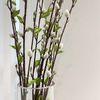 버들강아지 버드나무열매 조화가지