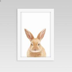 인테리어 동물액자 아기방 벽꾸미기 토끼A