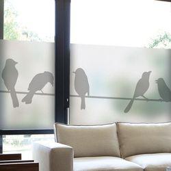 af708-글라스시트지전깃줄위새들
