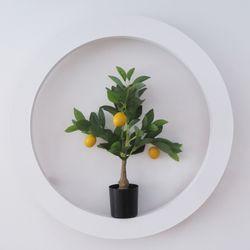 레몬나무 유주 인테리어 조화나무 미니S사이즈