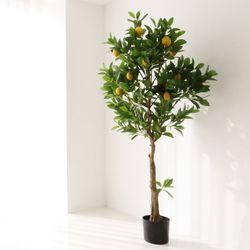 레몬나무 유주 인테리어 조화나무 초대형XXL사이즈