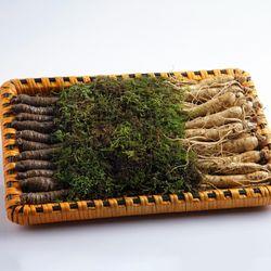충남 금산 수삼더덕 선물세트 小 1kg(수삼500g+더덕500g)