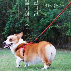 강아지 캔디 컬러 하네스 리드줄세트 XS S사이즈 2종