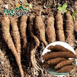정선더덕농원 6년근 생더덕 1kg (대-25뿌리내외)
