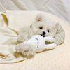 잠자는 숲속의 달당냥 강아지 애착인형 삑삑이 장난감