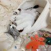 캣닢 마따따비 춥스 뜨개 막대사탕 고양이 캣닢 장난감