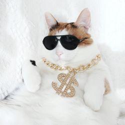 힙합 달러 목걸이 고양이 강아지 옷 할로윈 코스튬 MIYOPET