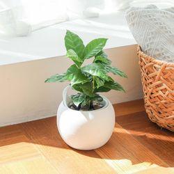 메이크정글 POTTY6 공기정화식물 원형 도자기 수경화분
