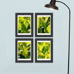 cq349-초록식물액자세트