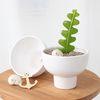 반려식물 피쉬본 키우기 DIY