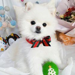 강아지 트리의요정 넥카라  핸드메이드 산타옷