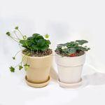 인테리어식물 딸기나무 기본원형토분 2colors