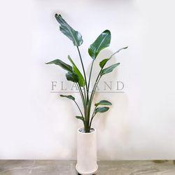 인테리어식물 공기정화식물 극락조 여인초 테라조화분