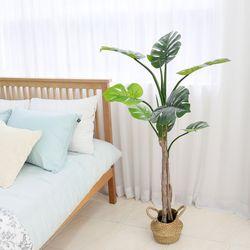 인조나무 조화 화분 내츄럴라인 몬스테라 150cm