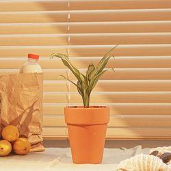 레옹과 마틸다의 그 식물 아글라오네마 실버퀸 화분 세트